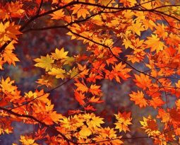 7 Ways to Maintenance your Home for the Fall